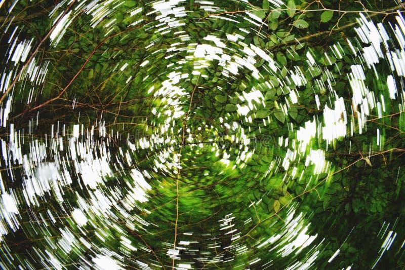 Mirage de cime d'arbre image libre de droits
