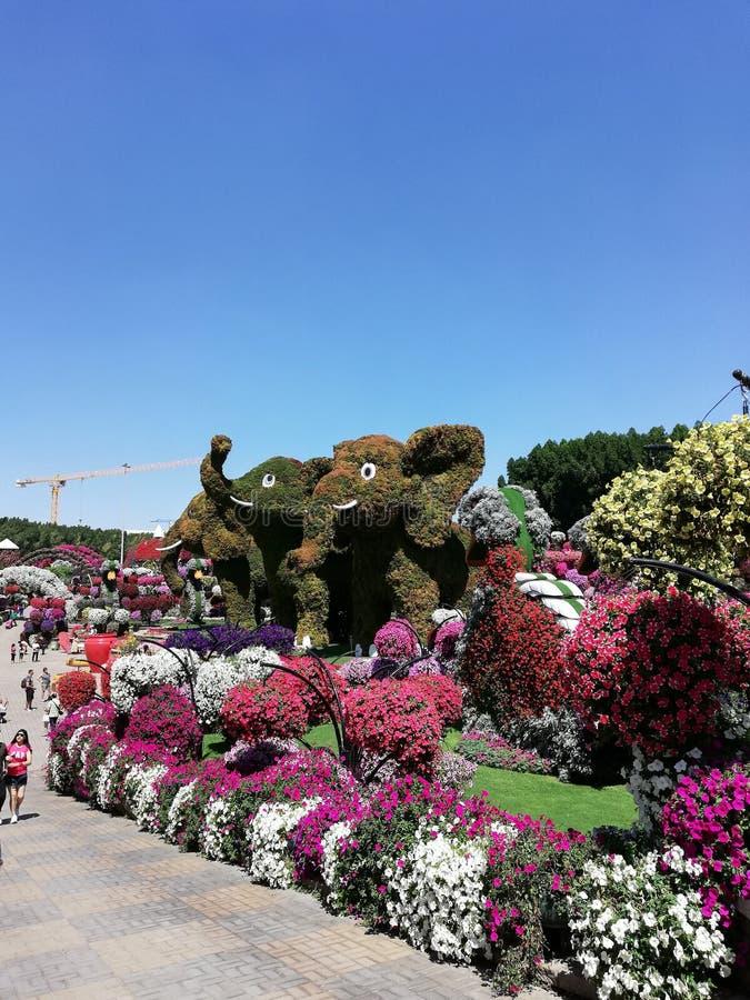 Mirakel i Dubai mirakelträdgård royaltyfri bild