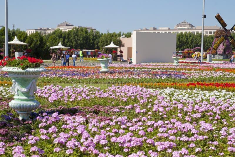 Mirakelträdgård, Dubai royaltyfria foton
