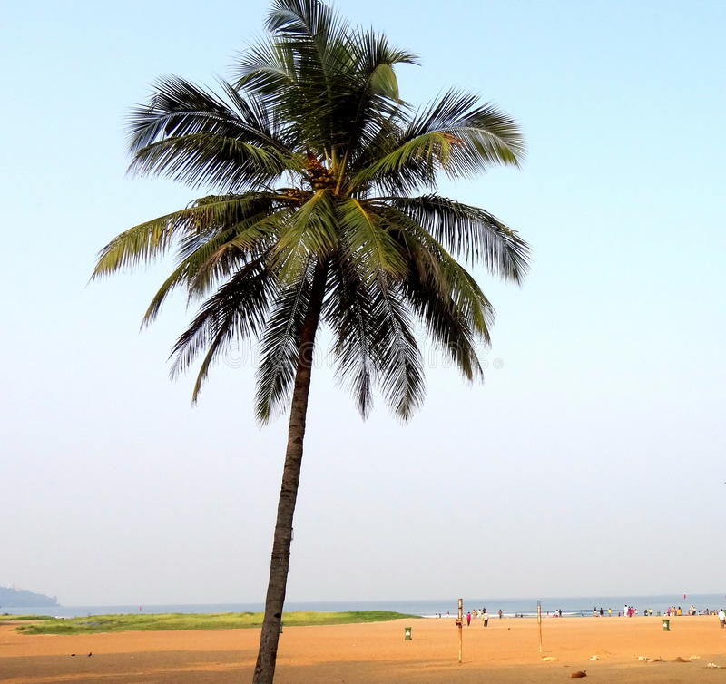 Miramar-Strand, Goa stockbilder