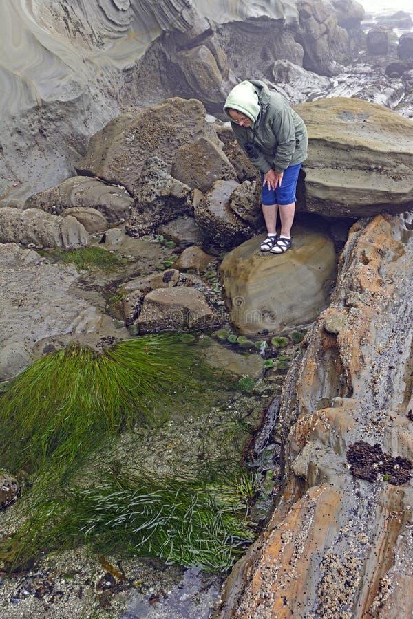 Mirando las piscinas de la marea durante la bajamar fotos de archivo