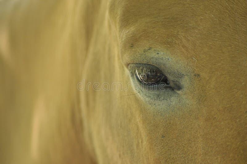 Mire el caballo salvaje imagen de archivo