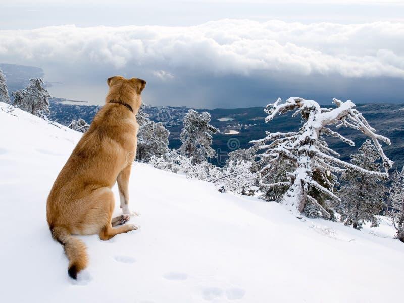 Mire el perro. fotos de archivo libres de regalías