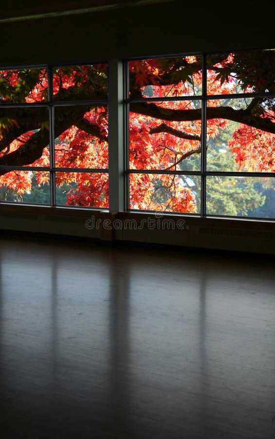 Mire a través de una ventana fotos de archivo libres de regalías