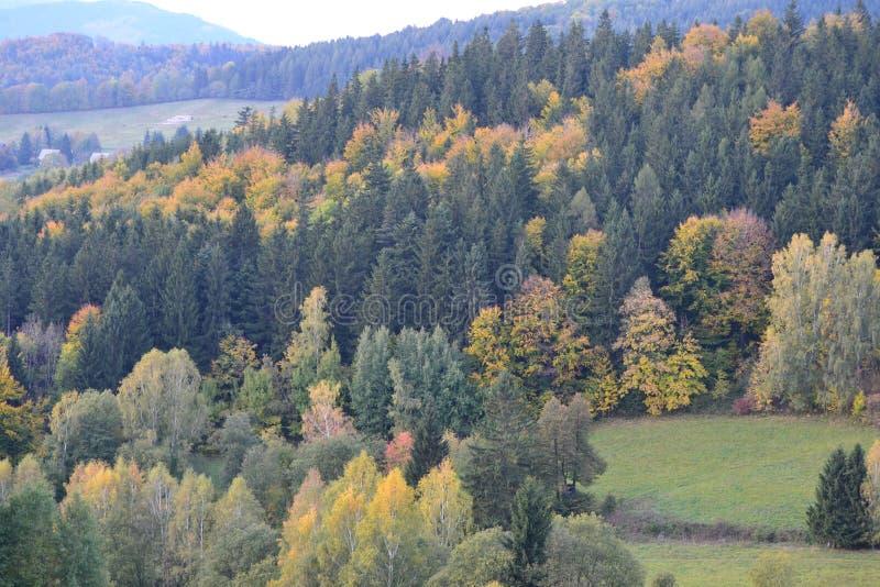 Miriam skog arkivbilder