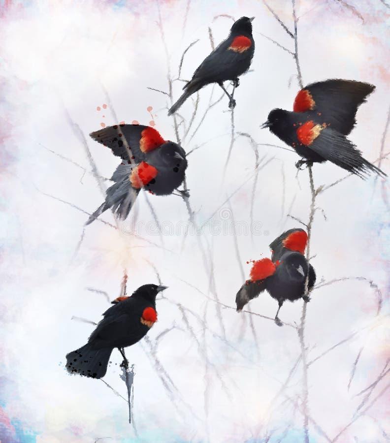 Mirlos de alas rojas stock de ilustración