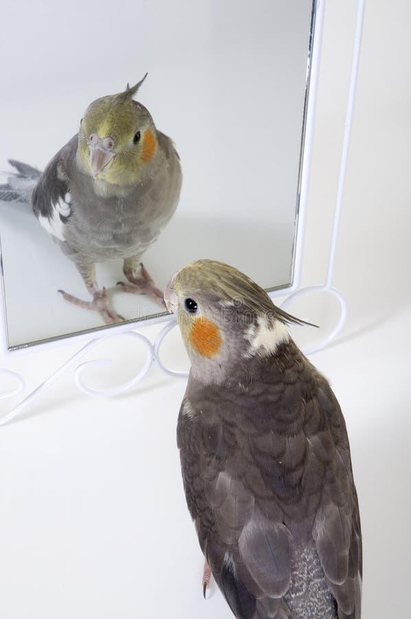 Mirror Friend
