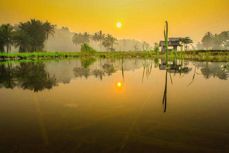 Mirror of life. Morning sunrise with reflection water on field asia bengkulu field fields forest indonesia landscapes life mirror morning mountain nature royalty free stock images