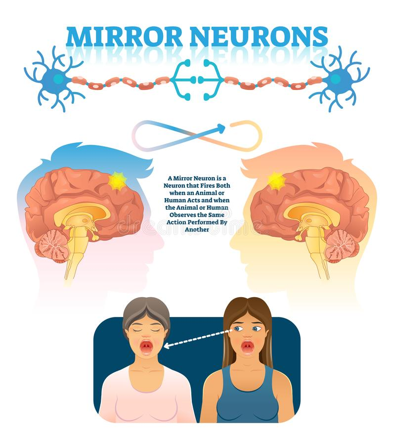 Free Mirror Neurons Vector Illustration. Medical Brain Action Explanation Scheme Royalty Free Stock Photos - 134059228