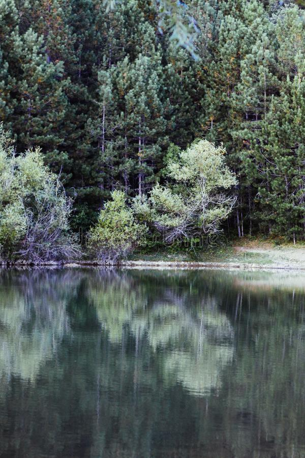 Mirror reflection of trees in the water. Reflection of an autumn forest in the lake water. royalty free stock photos