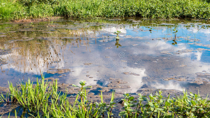Mirror reflection on water. Close up view stock photos