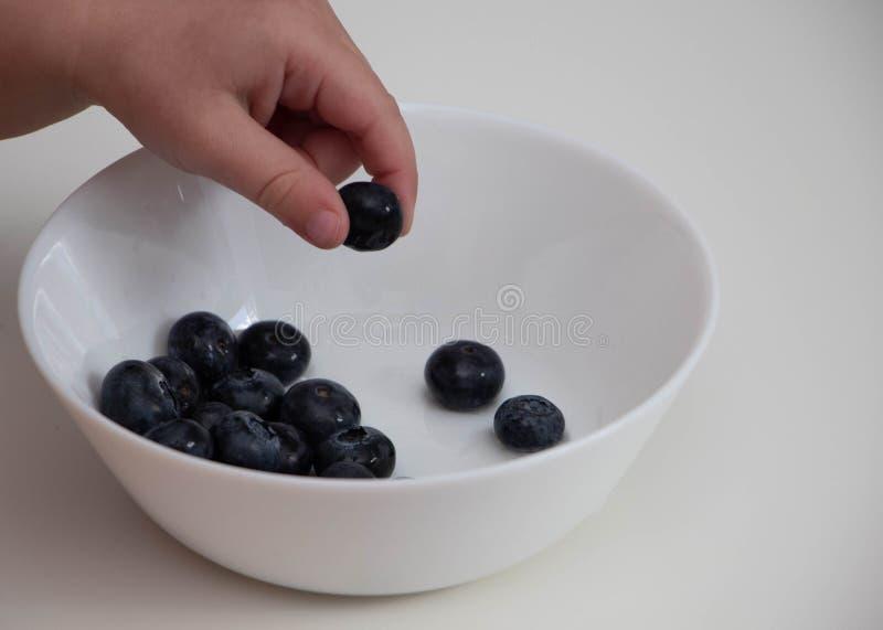 Mirtilli nelle mani di un bambino la mano del bambino prende i mirtilli da una ciotola bianca su un fondo bianco immagini stock