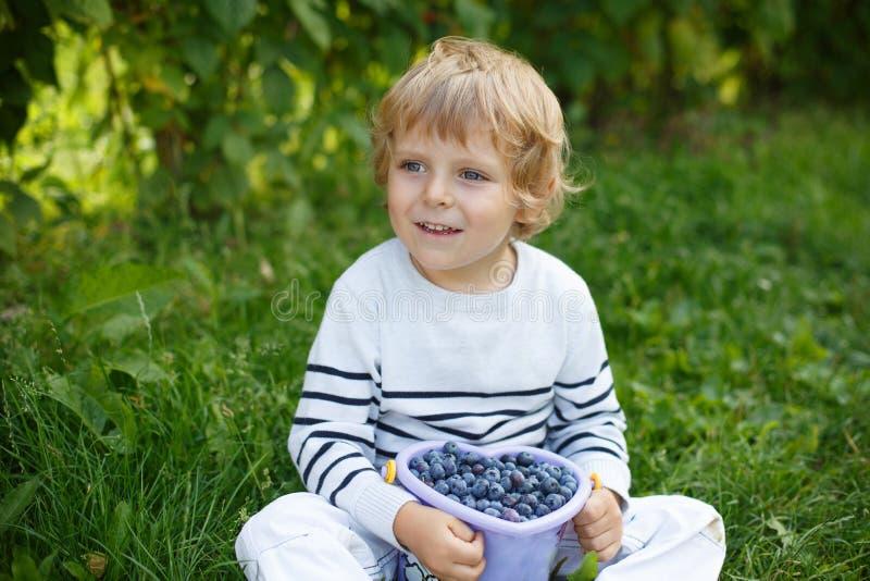 Mirtilo da colheita do rapaz pequeno na exploração agrícola orgânica da picareta do auto imagem de stock royalty free