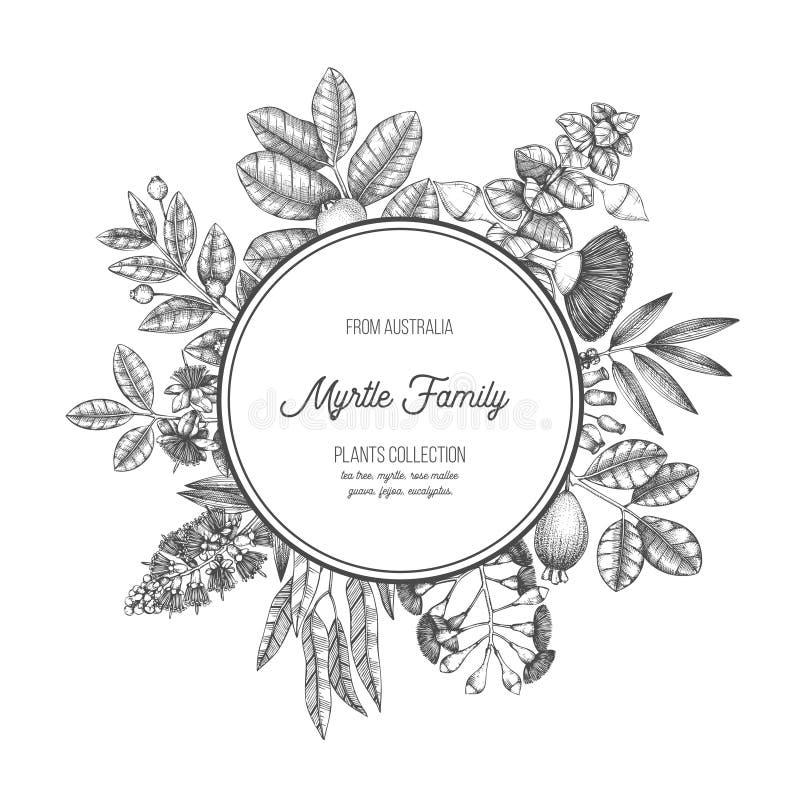 Mirtle planterar rund design Vektorramen med teträdet, eukalyptuns, guavan, myrtusen, feijoa skissar Medicinalväxter för nödvändi stock illustrationer