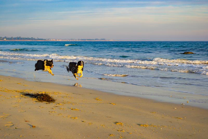 Mis perros que juegan en la playa fotos de archivo libres de regalías