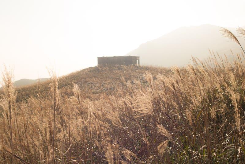 Miscanthus con la casa de piedra, pico de la puesta del sol en Hong Kong fotografía de archivo libre de regalías
