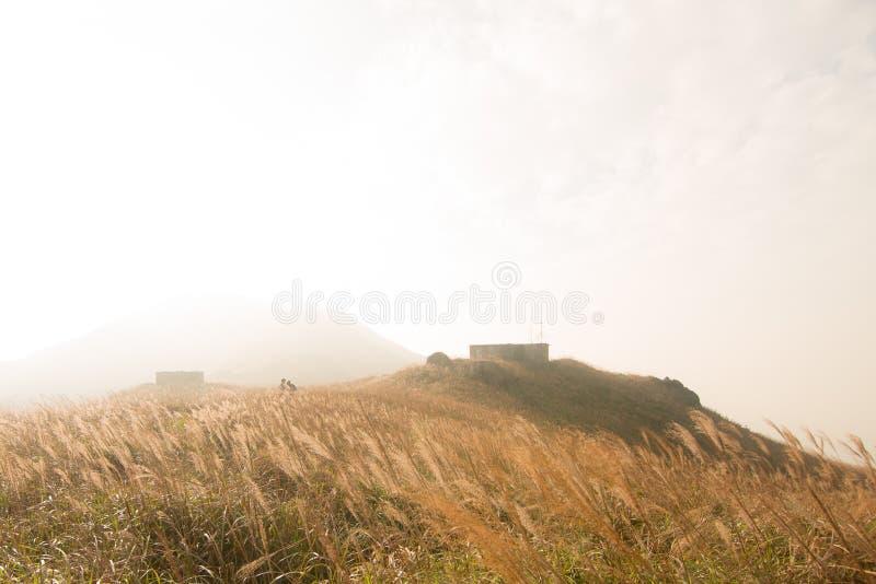 Miscanthus con la casa de piedra, pico de la puesta del sol en Hong Kong imágenes de archivo libres de regalías
