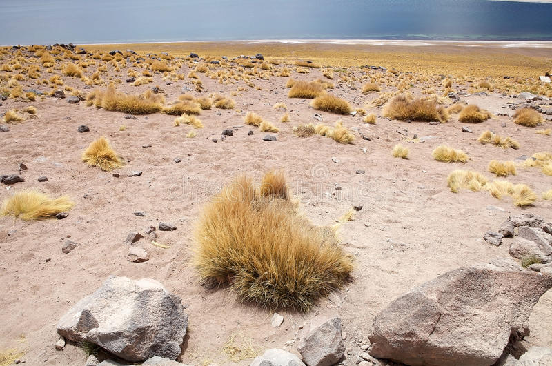 Download Miscanti Lagoon, Chile Stock Photo - Image: 83700752