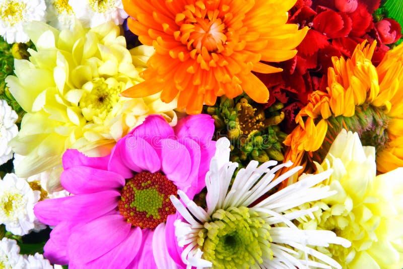 Miscela dei fiori immagini stock