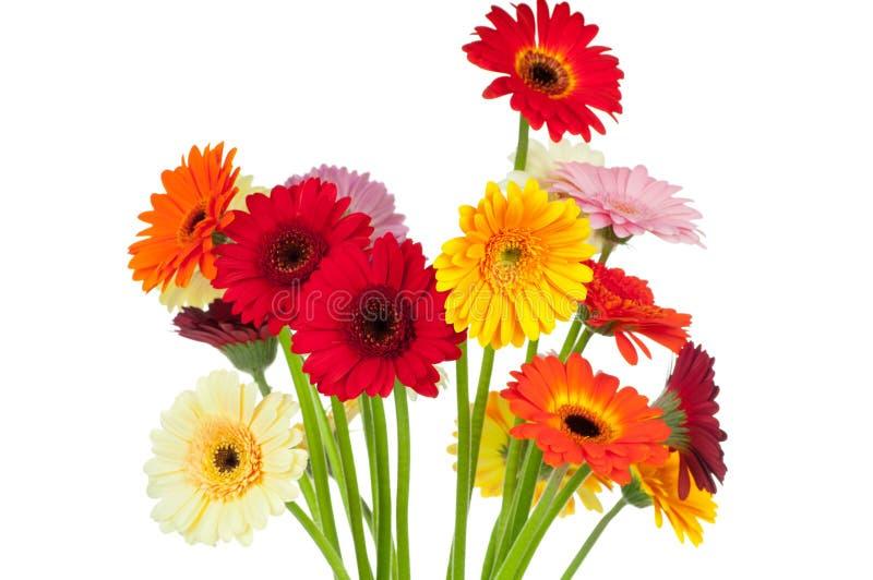 Miscela dei fiori del gerber fotografia stock