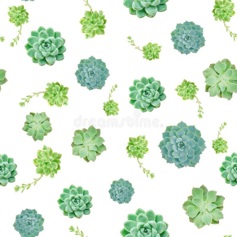 Miscela del fondo succulente verde del modello della pianta fotografia stock libera da diritti