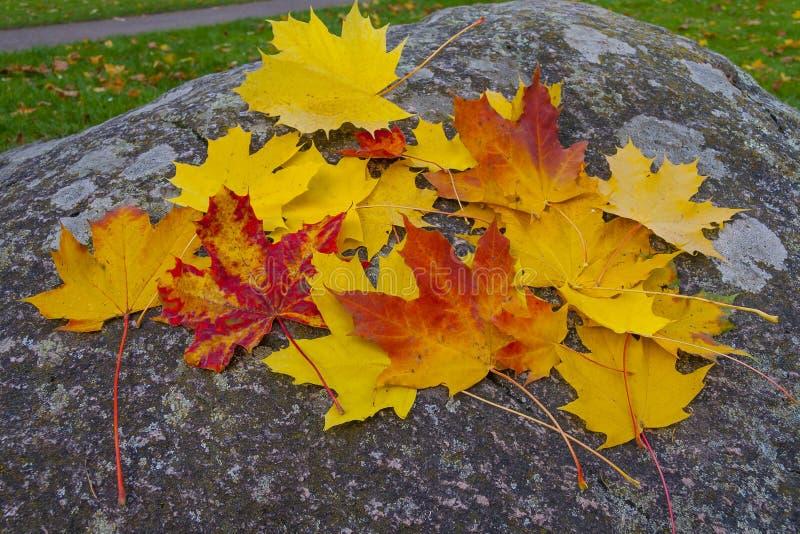 Miscela delle foglie di autunno immagini stock