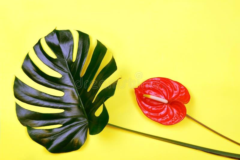 Miscela delle foglie tropicali con i fiori dell'anturio su fondo di corallo d'avanguardia fotografia stock libera da diritti