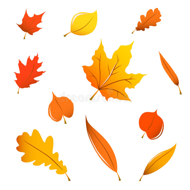 Miscellaneous fall leaves. Miscellaneous orange fall leaves isolated on white royalty free illustration