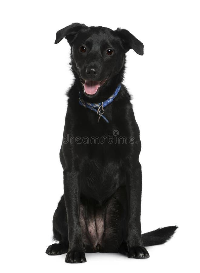 Misch-züchten Sie den Hund, 2 Jahre alt und sitzen lizenzfreie stockfotografie