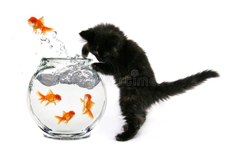 Mischeivious Kätzchen stockbild
