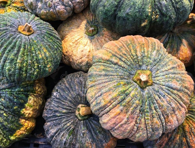 Mischen Sie reifen und rohen großen Kürbis in der rauen Haut der Herbsternte und im trockenen Stiel stockfotos