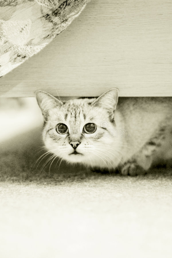 Download Mischief Cat Royalty Free Stock Image - Image: 3559646