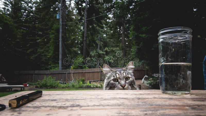 Mischief cat royalty free stock photography