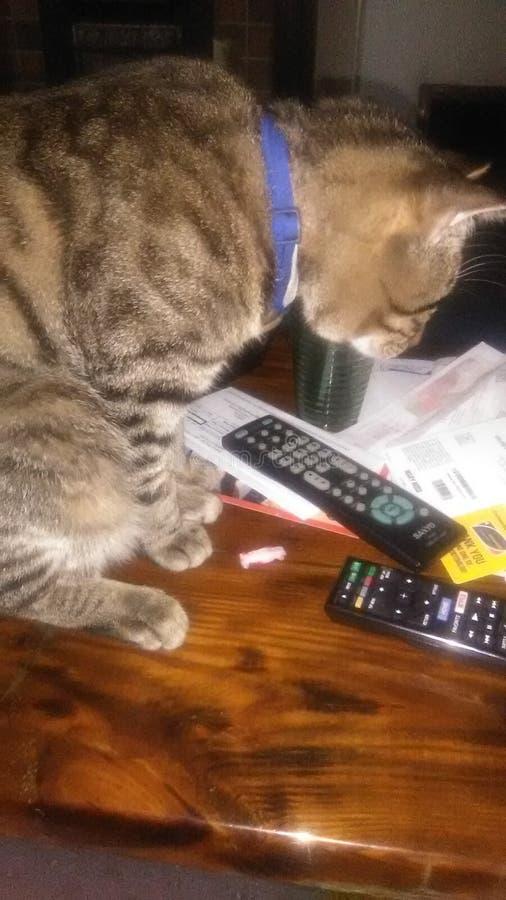 Mischievous cat royalty free stock photos