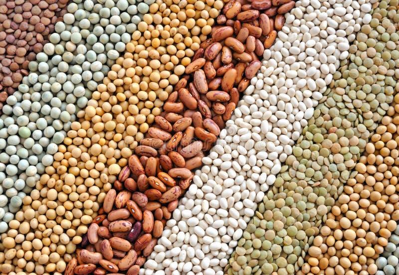 Mischung der getrockneten Linsen, Erbsen, Soyabohnen, Bohnen lizenzfreie stockfotografie