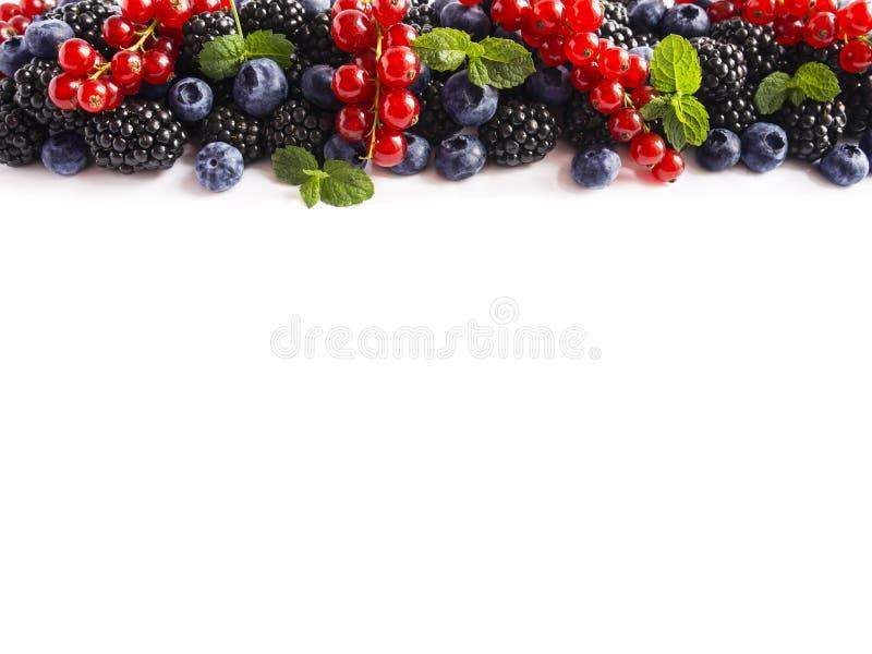 Mischungsbeeren auf einem weißen Hintergrund Reife rote Johannisbeeren, Brombeeren, Blaubeeren, mit tadellosen Blättern auf weiße stockfotografie