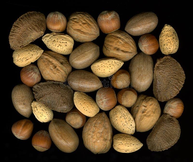 Mischungsmuttern in den Shells: Walnuss, Haselnuss, Pekannuss, almon stockbild