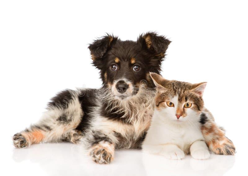 Mischzuchthund und Umarmen der netten Katze auf weißem backgrou stockfoto