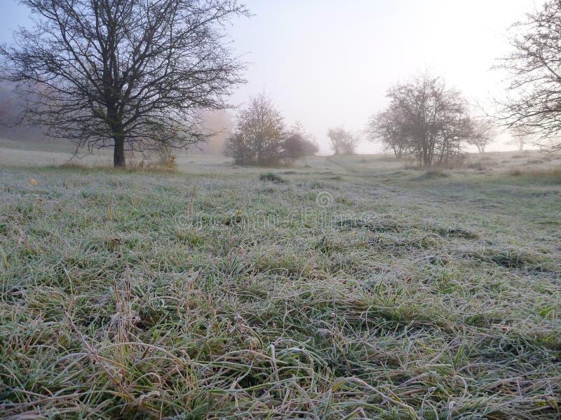 Misfy frostig höstmorgon i naturen royaltyfri fotografi