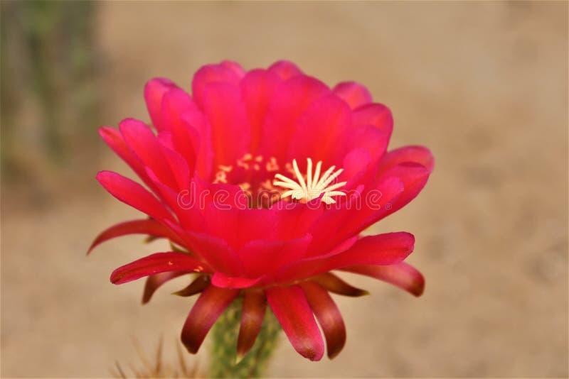 Misja San Xavier del Bac, Tucson, Arizona, Stany Zjednoczone fotografia royalty free