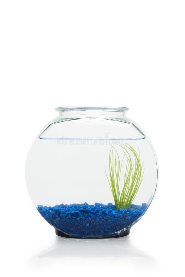 miskę ryb zdjęcie royalty free