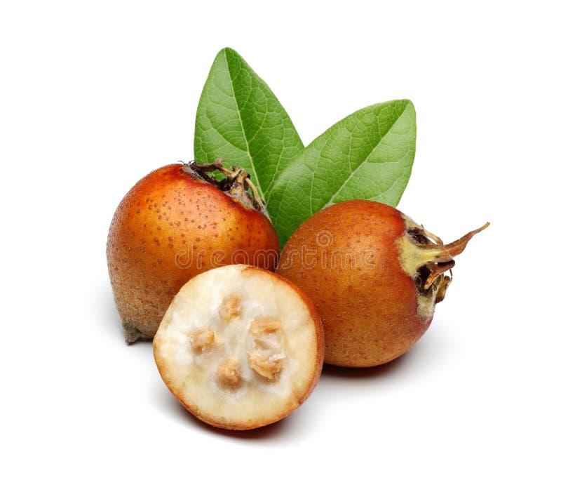 Mispelfrukt med gröna sidor royaltyfri fotografi