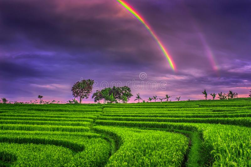 miss you rainbow royalty free stock image
