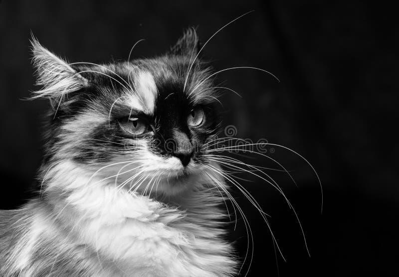 Missfallene Katze auf einem dunklen Hintergrund stockfoto