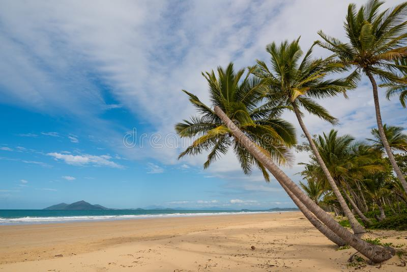 Mission Beach, Australia. Palms swaying at Mission beach - a popular tourist destination in North Queenland, Australia stock images