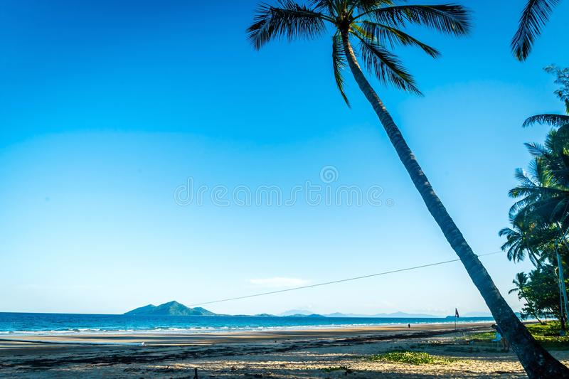 Mission beach palm tree in the summer stock images