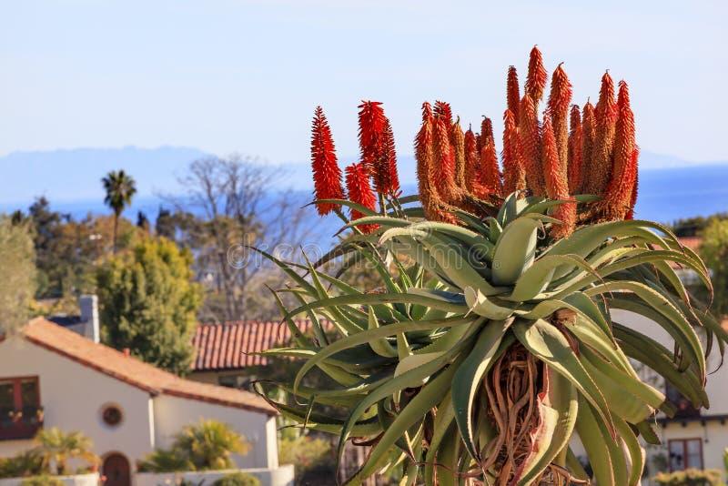 Missione gigante Santa Barbara California di Barberae dell'aloe dell'albero fotografia stock libera da diritti