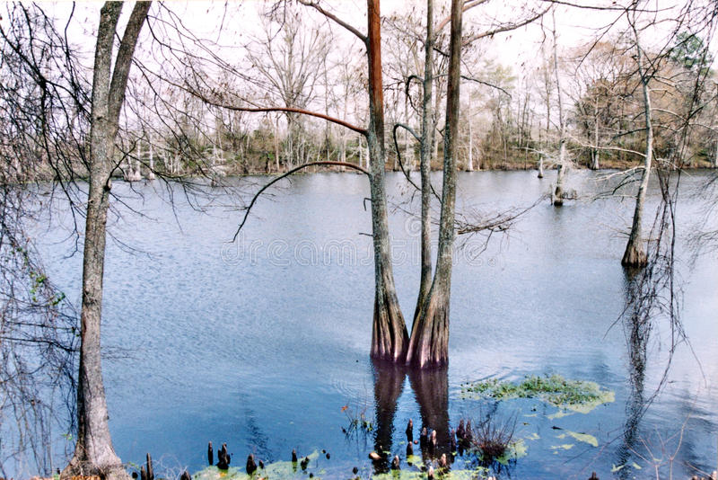 Mississippi das schwarze Bayou im März 2002 lizenzfreies stockbild
