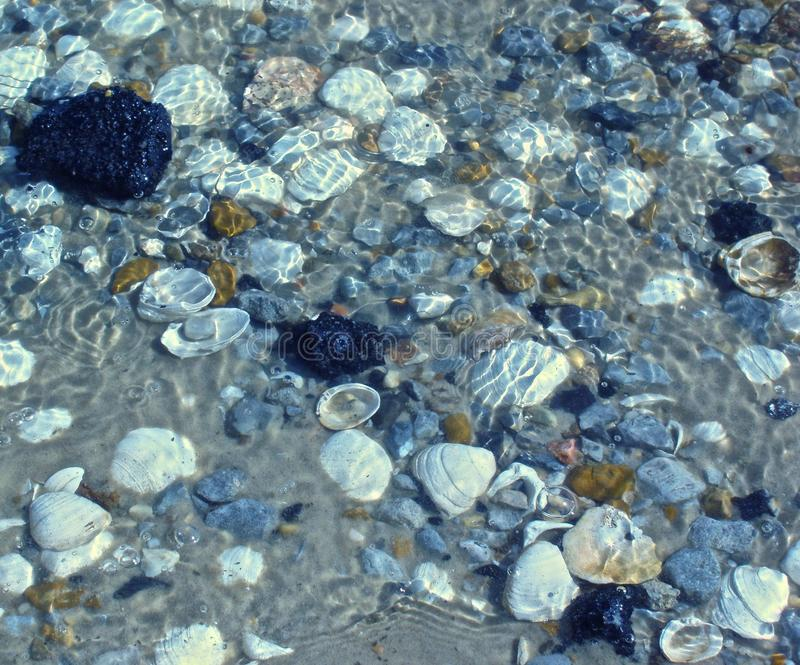 Mississippi Gulf coast tide pool. Many different shells collect in the sand along the Mississippi Gulf coast royalty free stock photography