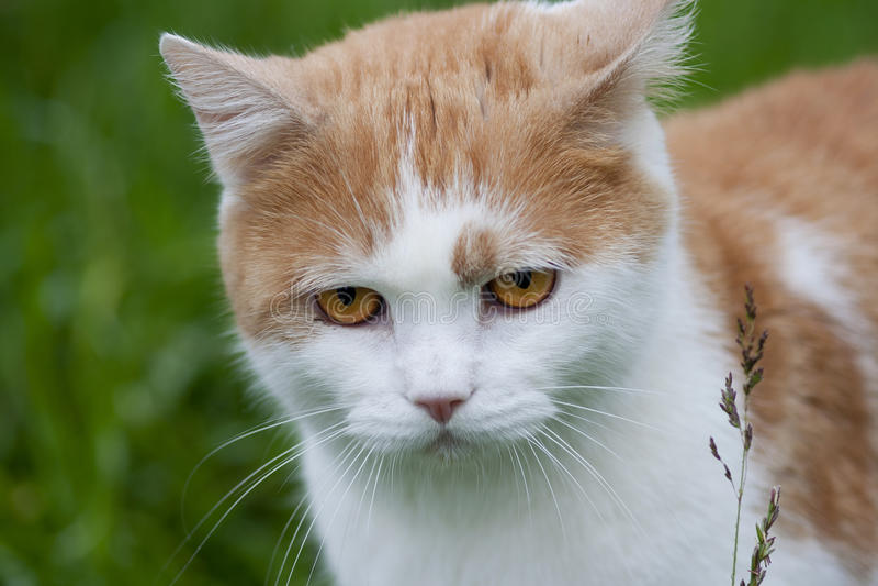 Missmutige Katze stockfotos